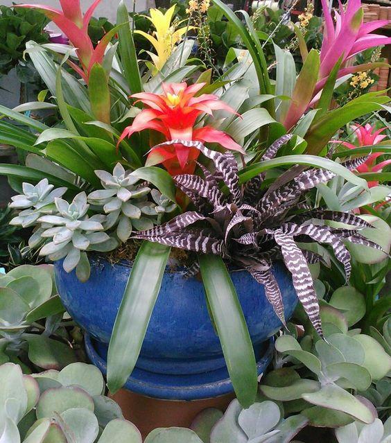 Arranjo com plantas tropicais.