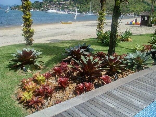Jardim na praia na bromélia.