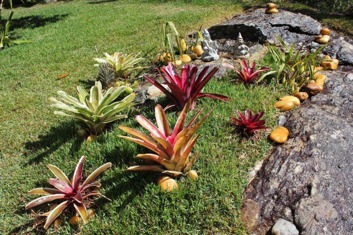 Jardim oriental simples com bromélia.