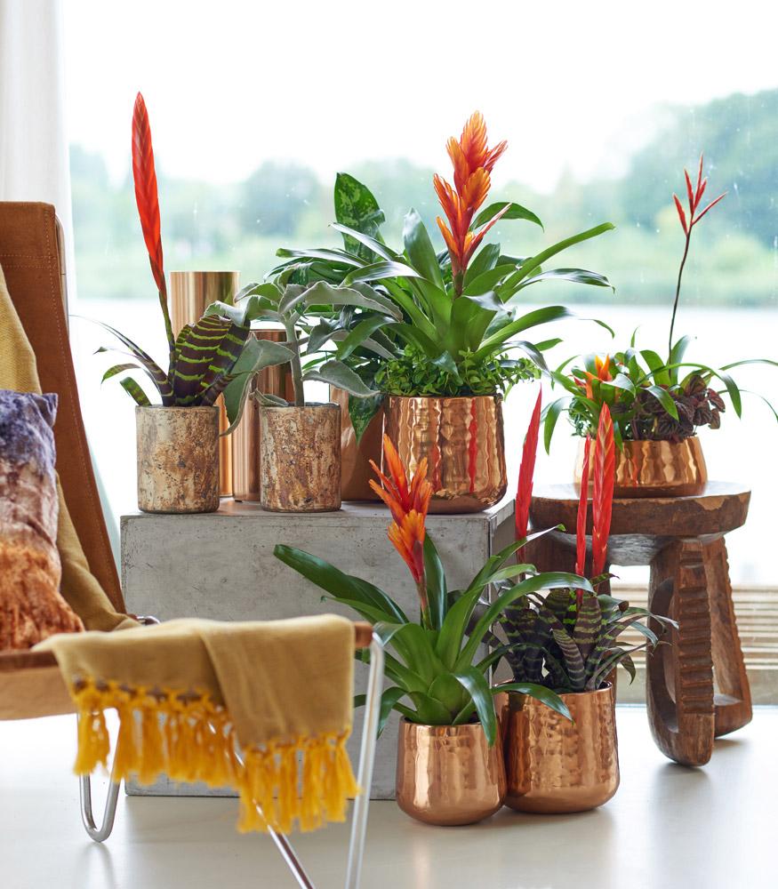 Vasos cromados com plantas diferentes.
