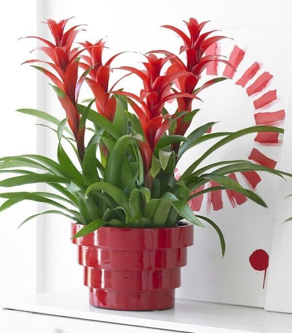 Vaso vermelho decorativo com bromélia.