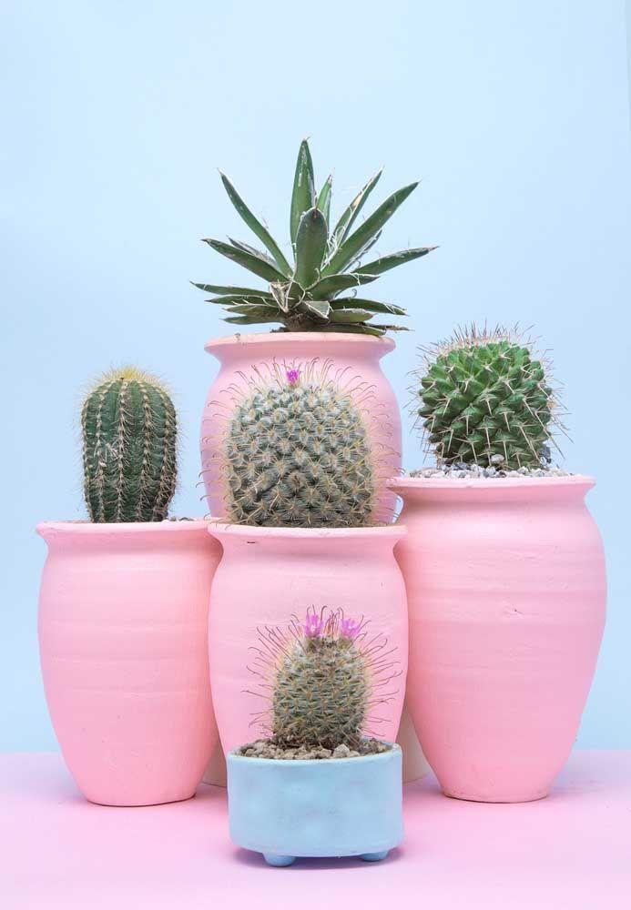 Vasos coloridos com cactos.