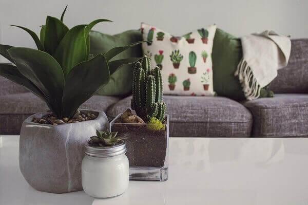 Mesa de centro decorada com plantas.