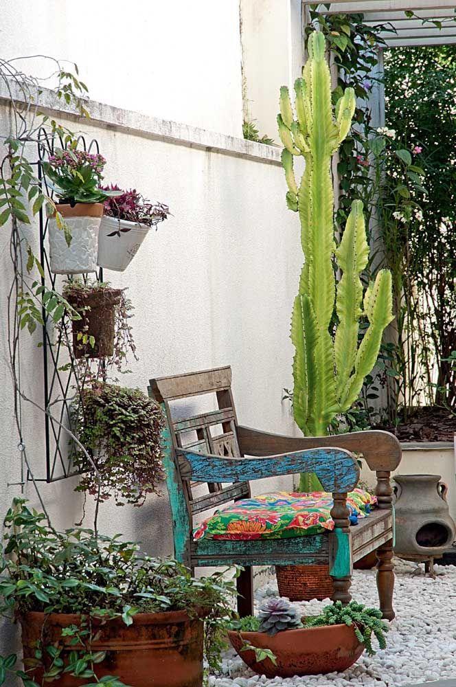 Jardim externo com plantas.