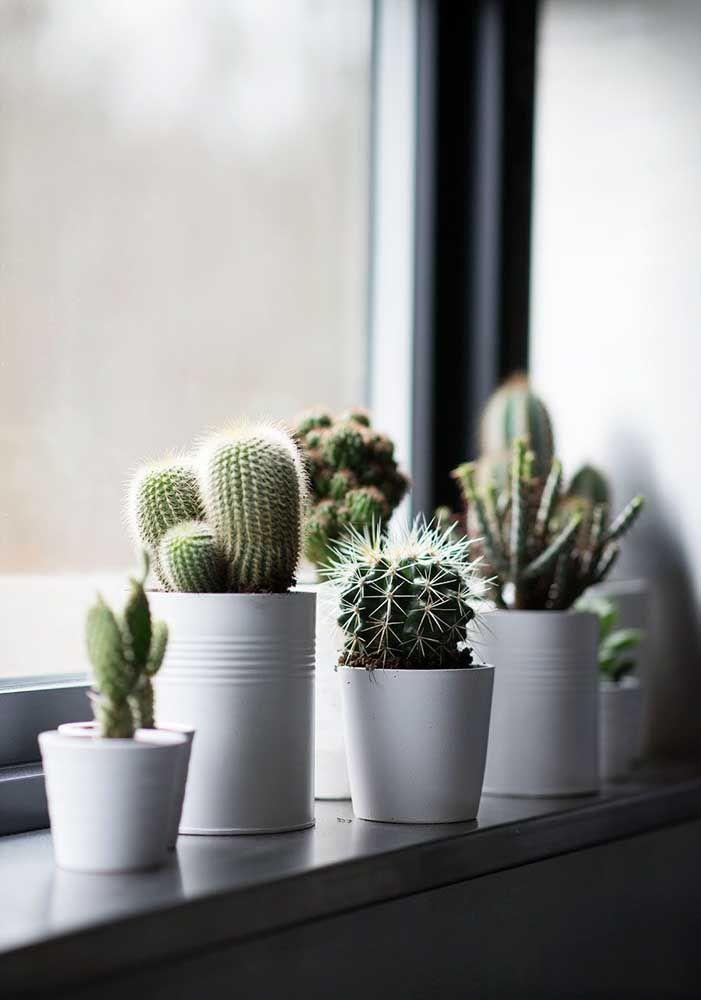 Vasos de cerâmica branca com mini cactos.