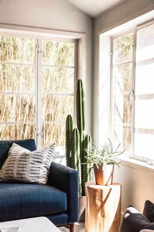 Sala com sofá azul e cactos.