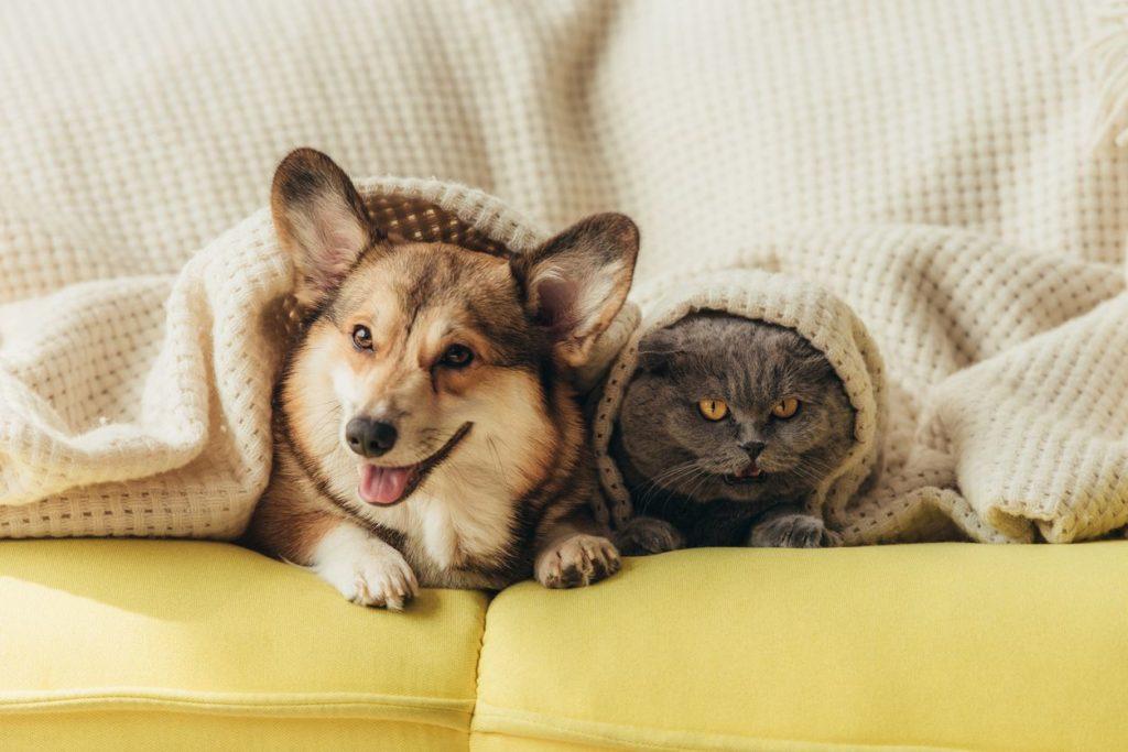 Gato e cachorro no sofá.