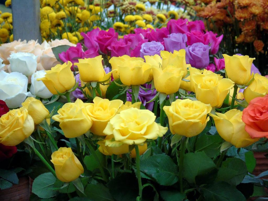 Tipos de flores: rosas coloridas.
