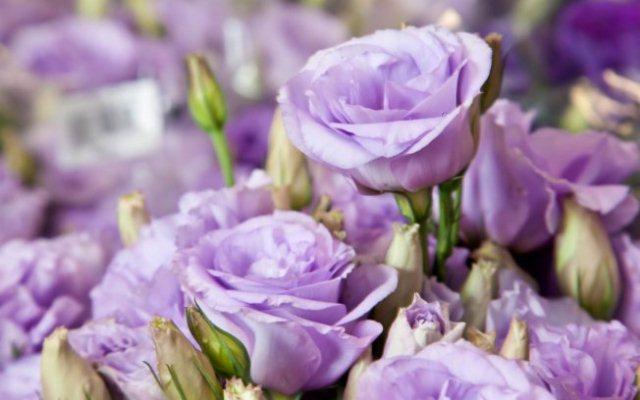 Flores de lisianto.