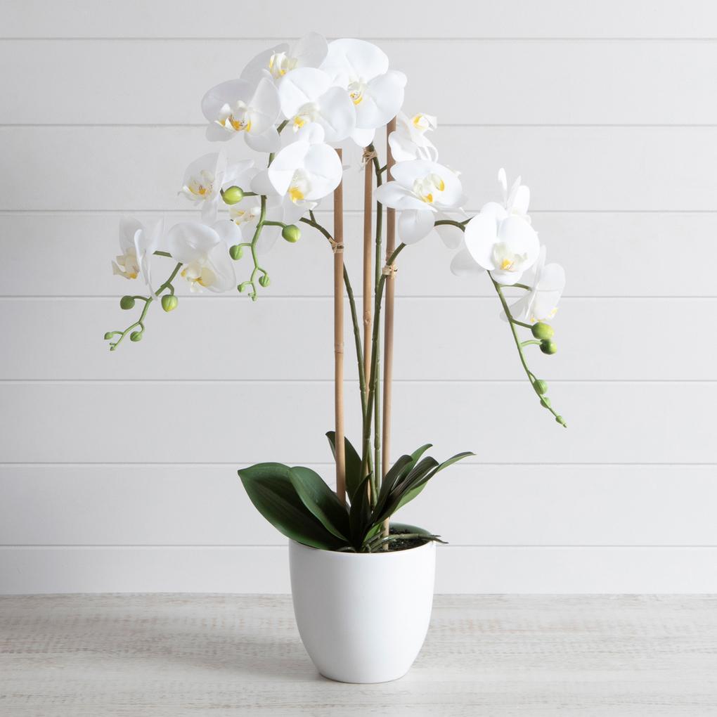 Vaso de orquídeas phalaenopsis.
