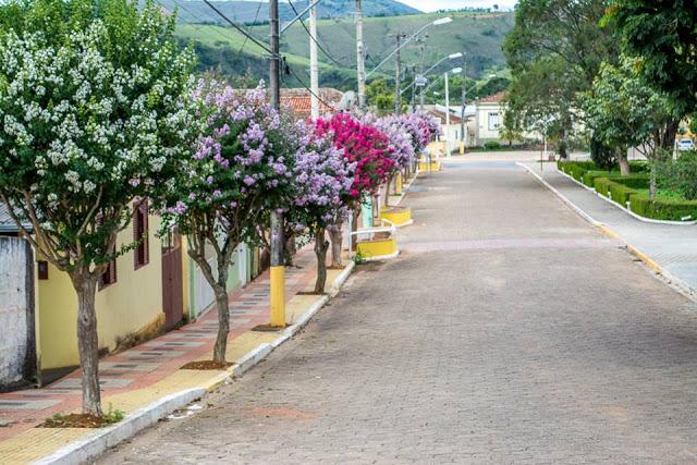 árvores de espécies e cores distintas em calçada