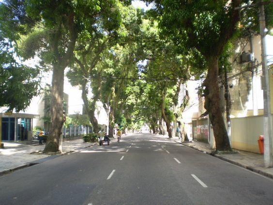 árvores para calçada de grande porte em rua urbana