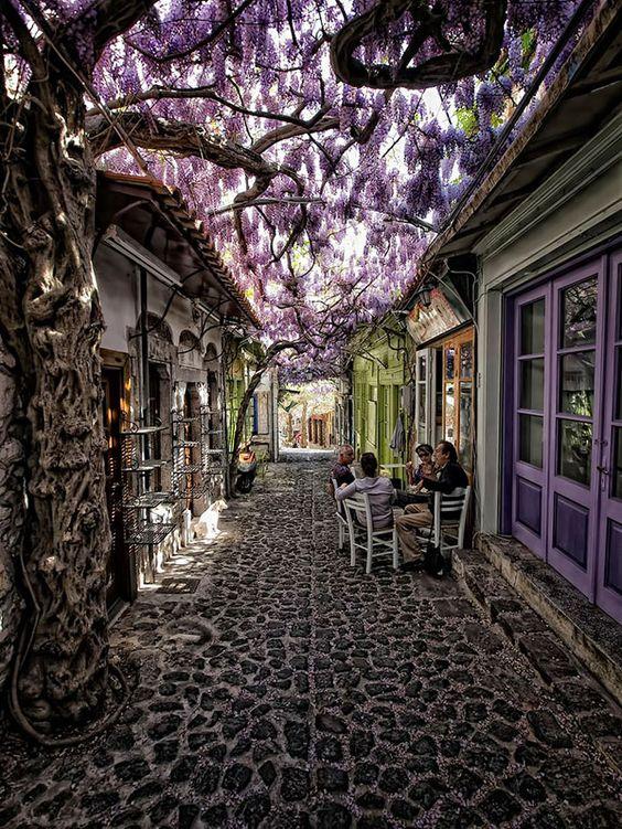 árvores de flores roxas em rua para pedestre