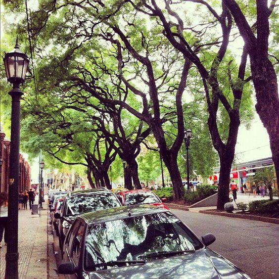 rua com árvores para calçada de grande porte em grande avenida com carros