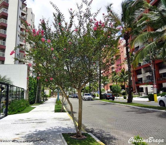 árvore de pequeno porte florida em zona urbana