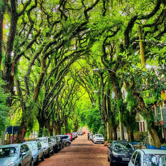 árvores de grande porte enfileiradas em calçada