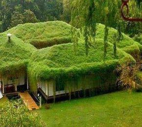 casa camuflada na vegetação