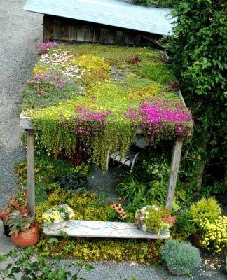 teto verde florido em pergolado de madeira