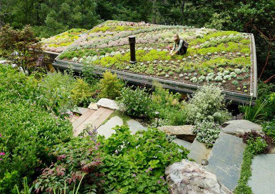 plantas e hortaliças em telhado verde em manutenção e cuidados