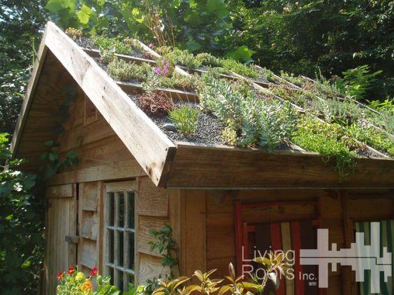 casa pequena de madeira com telhado florido