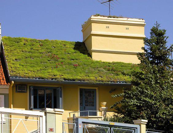 casa amarela com telhado verde portão e árvore frontal