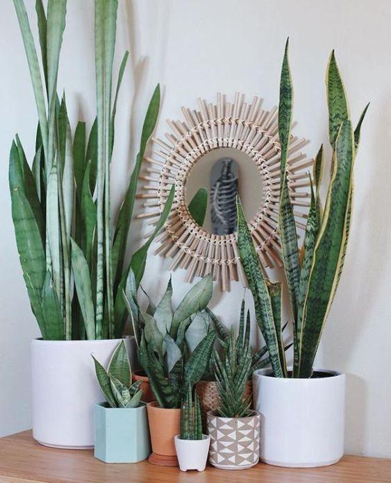 Vasos de tamanhos e espécies de plantas variados com espelho na parede de fundo