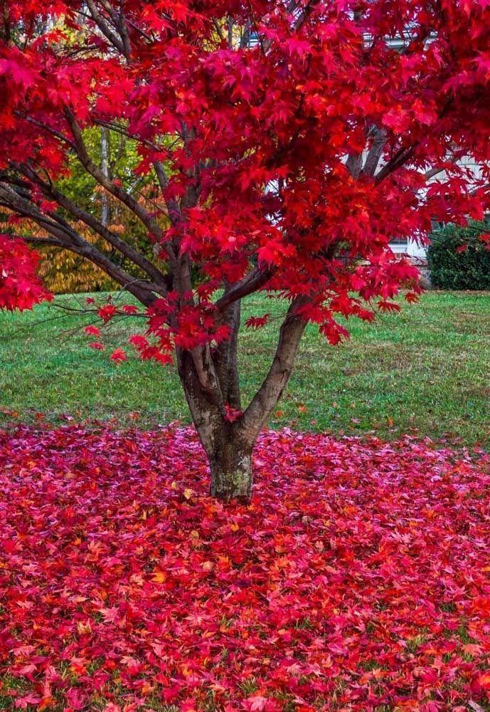 arvore para calçada flores vermelha no chão
