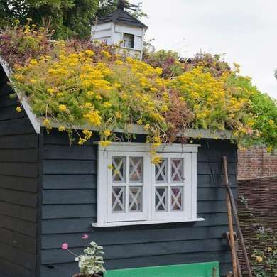 casa pequena madeira teto verde florido
