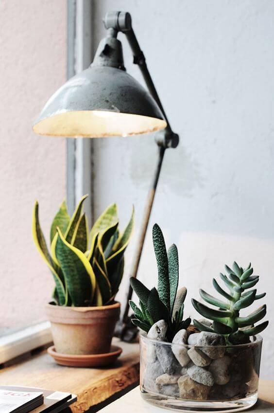 vaso de suculentas mini espada cantinho com luminária
