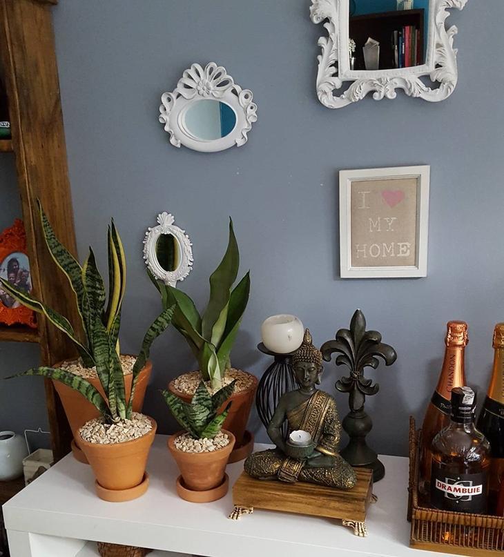 variedade plantas decora com vasos zen