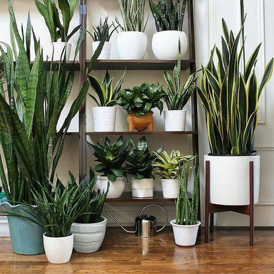 prateleira alta com vasos diversos jardim vertical