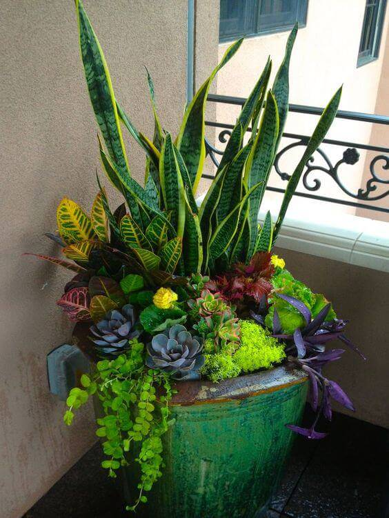 plantas em vaso antigo varanda