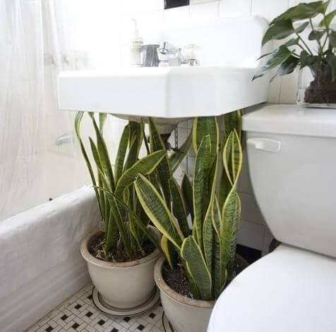vasos de plantas embaixo da pia