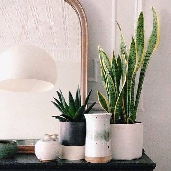 vasos com plantas estilo escandinavo