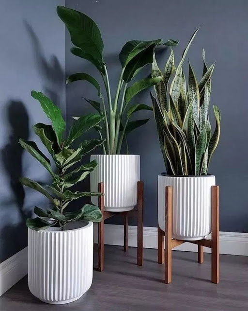 mix plantas internas vasos variados