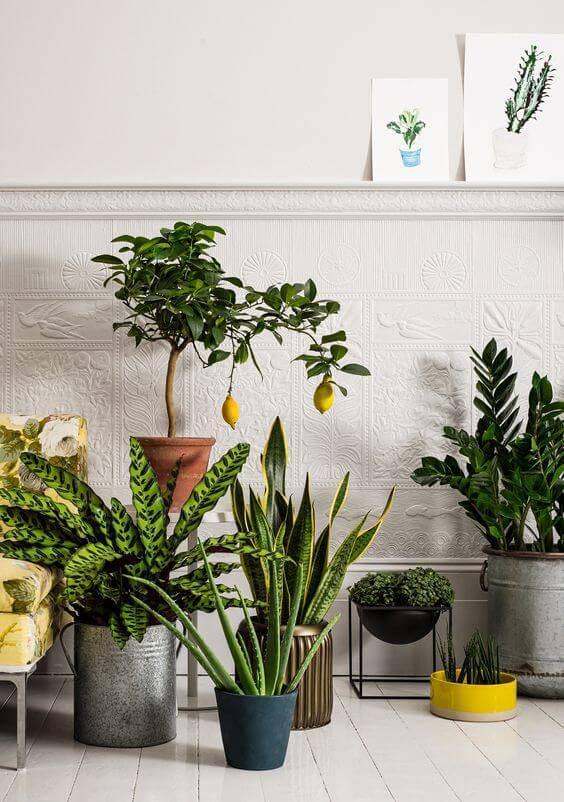 parede desenhada com plantas variadas