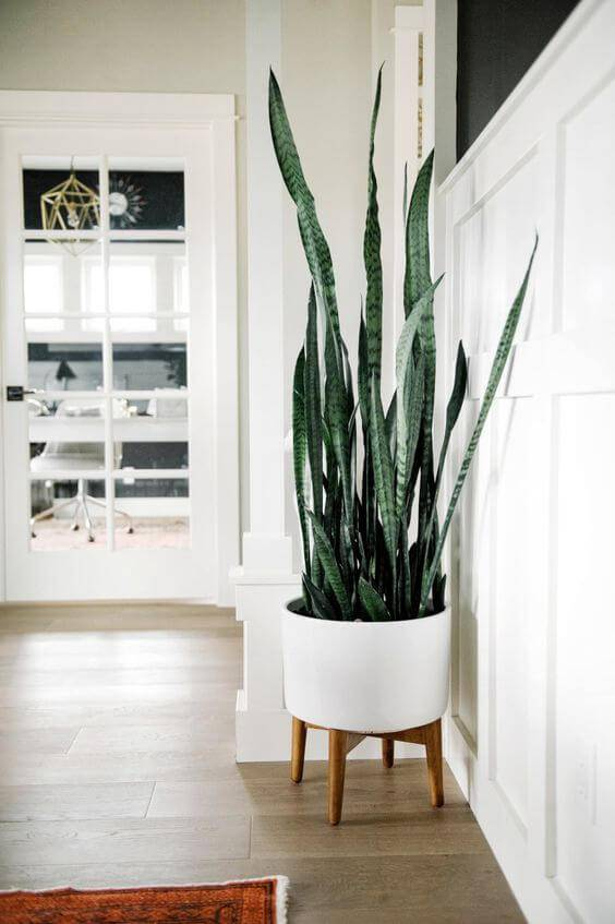 vaso com pés de madeira e plantas