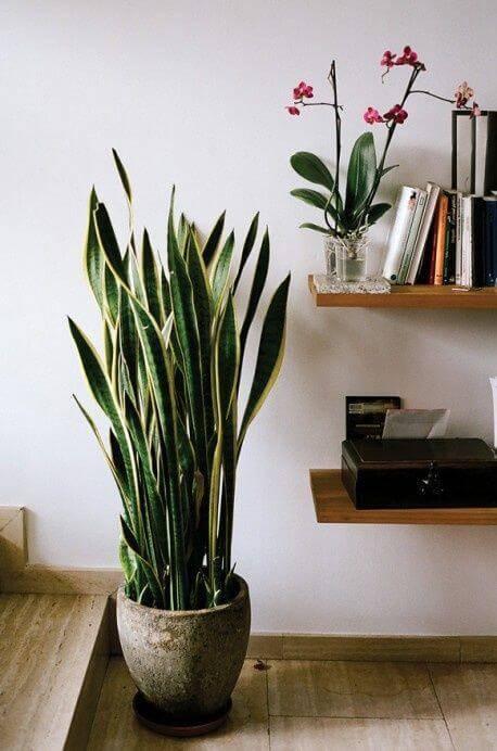 planta santa barbara vaso de cimento com prateleiras
