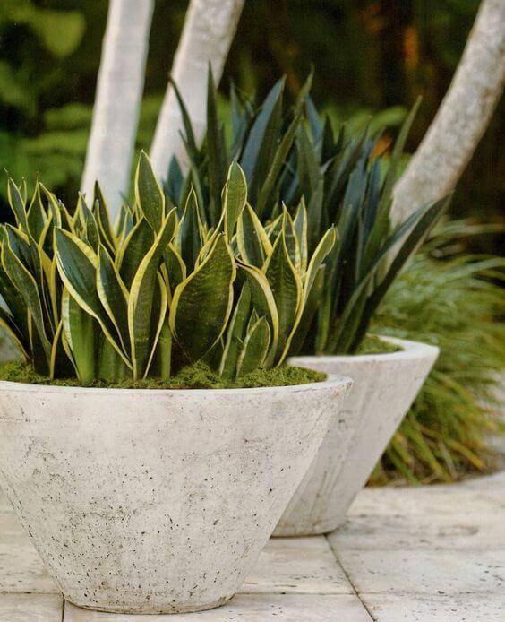 plantas vaso de concreto triangulas area externa