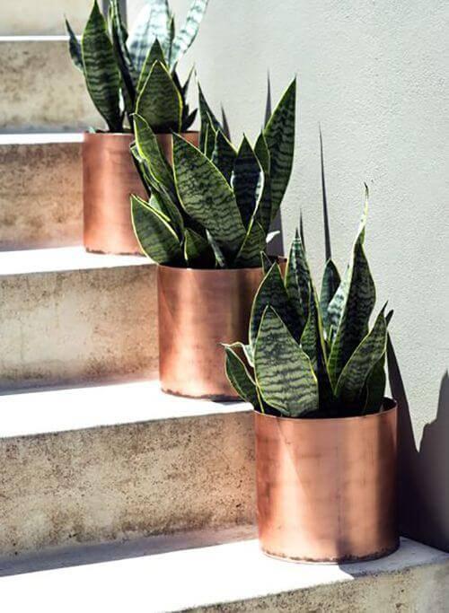 vasos na escada de cobre com plantas