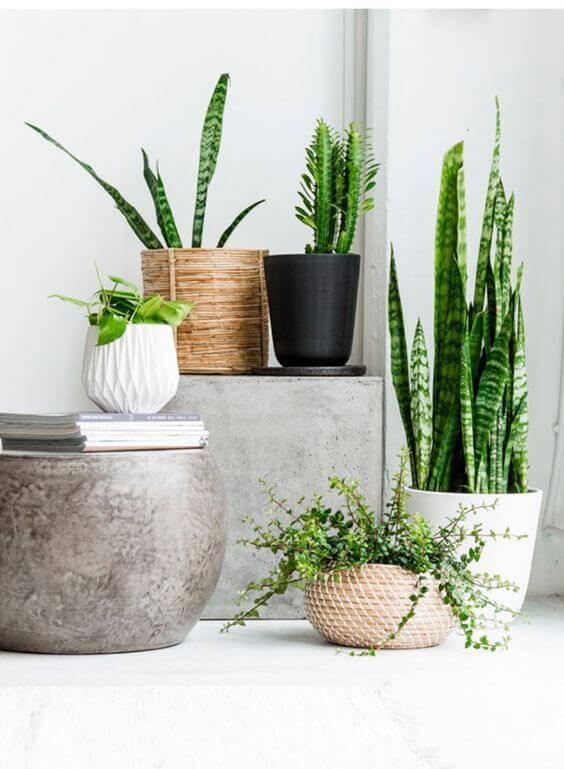 mix de plantas vasos variados