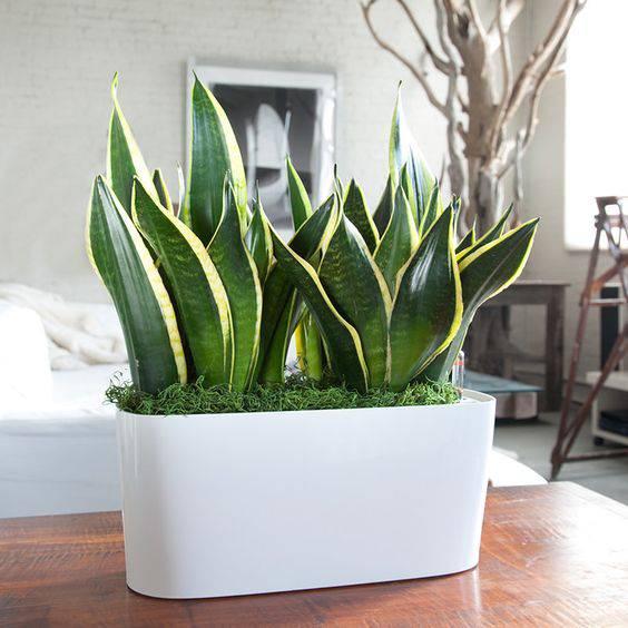 vaso branco pequeno espécie planta mini