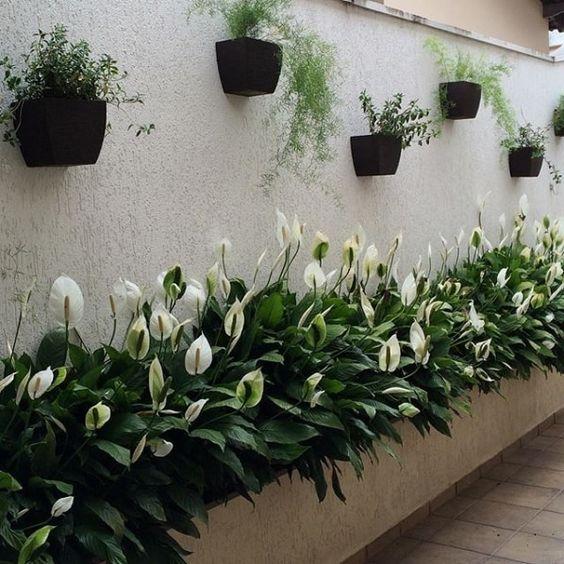Jardim com várias flores de lírio brancas.