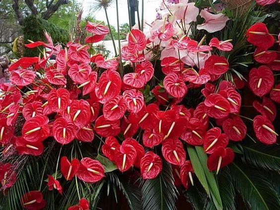 Jardim com flores vermelhas.