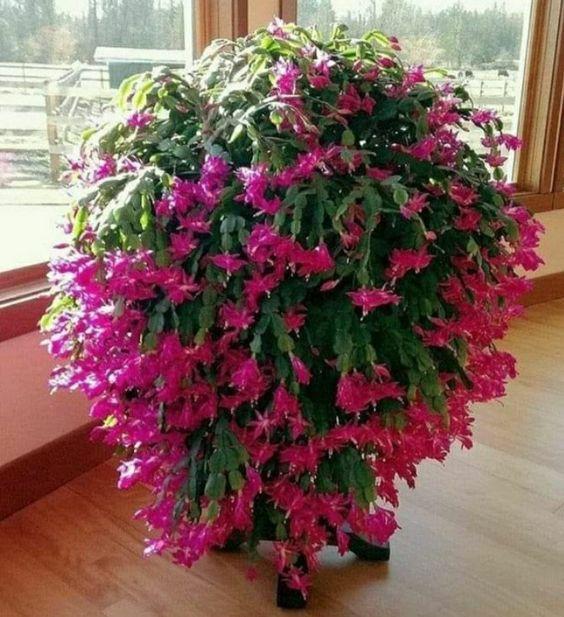 Vaso com flores de maio.