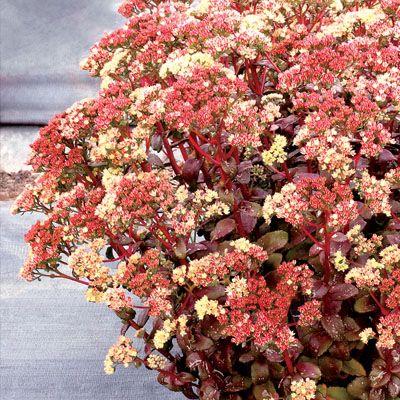 Arbusto com flores coloridas.