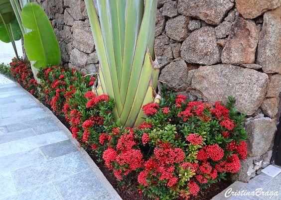 Jardim com flores baixas e vermelhas.