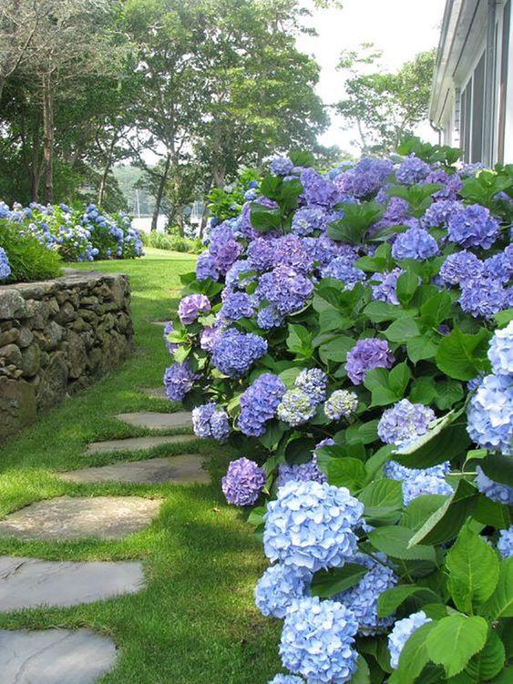 Jardim com arbustos de hortênsia.
