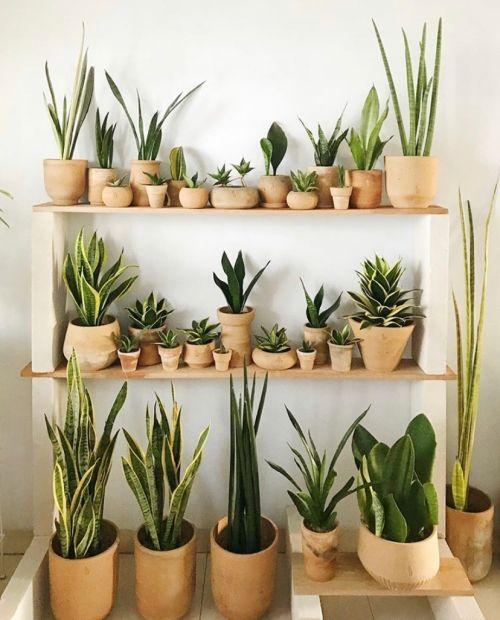 mix de plantas em vasos de barros em prateleira jardim vertical