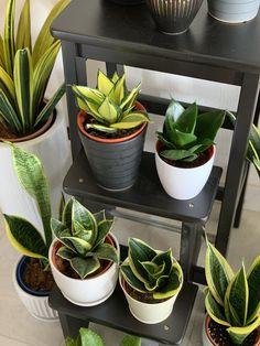mix de minis plantas sobrepostos em vasos em degraus